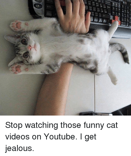 Image of: Dogs Funny Cat Site Funny Hraa 44 Stop Watching Those Funny Cat Videos On Youtube Get