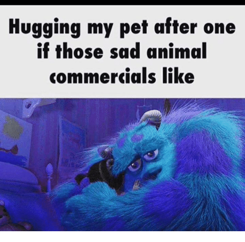 hugging my pet after one if those sad animal commercials like meme