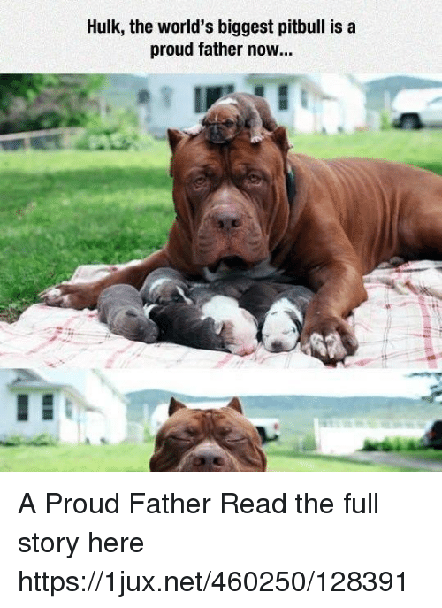 Hulk the World's Biggest Pitbull Is a Proud Father Now a