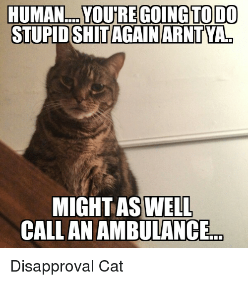 Disapproval Cat