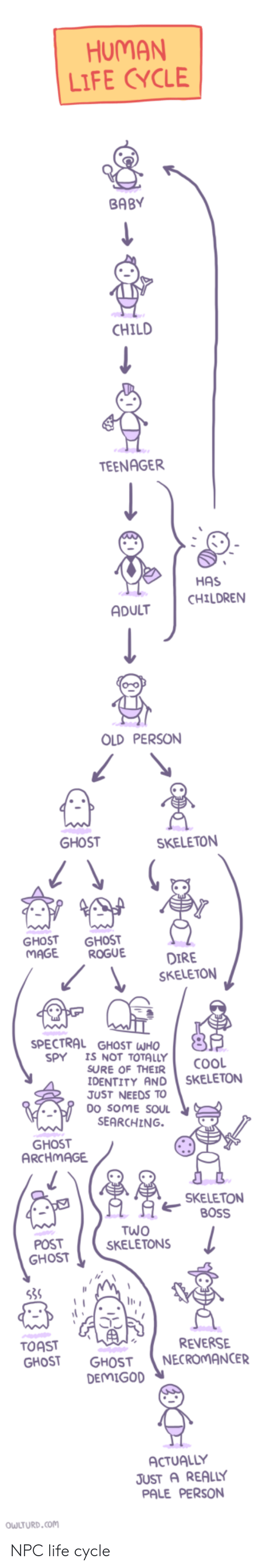 Children, Life, and Cool: HUMAN  LIFE CYCLE  BABY  CHILD  TEENAGER  HAS  CHILDREN  ADULT  OLD PERSON  SKELETON  GHOST GHOST  MAGE ROGUE  SKELETON  SPECTRAL GHOST WHO  5  SPY I NOT TOTALLY cooL  SURE OF THEIR  IDENTITY AND SKELETON  JUST NEEDS TO  DO SOME SOUL  SEARCHING.  SKELETON  80SS  POST  SKELETONS  OST  TOAST  GHOST GHOST NECROMANCER  REVERSE  DEMIGOD  ACTUALLY  JUST A REALLY  PALE PERSON  OWLTURD.com NPC life cycle