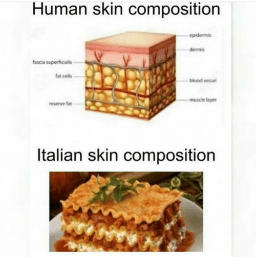 layers meme: human skin composition epidermis dermis fascia, Muscles
