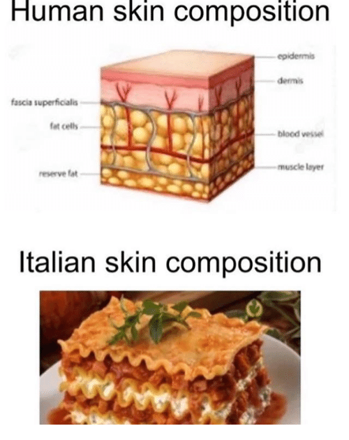Human Skin Composition Epidermis Dermis Fascia Superficialis Fat