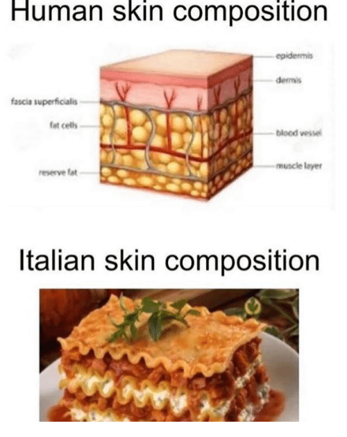 human skin composition epidermis dermis fascia superficialis fat, Muscles