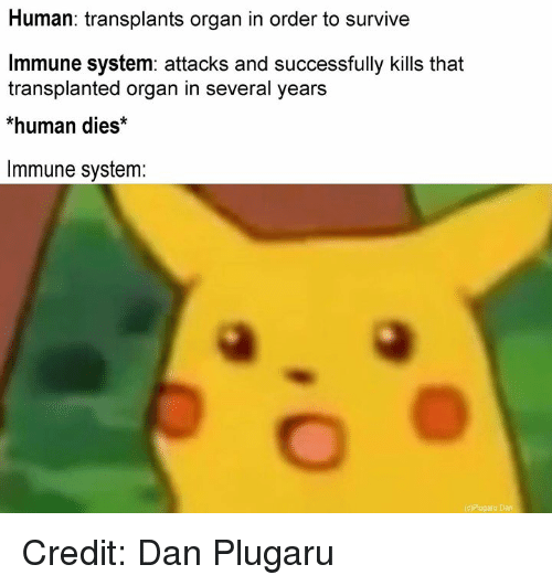 Memes, 🤖, and Human: Human: transplants organ in order to survive  Immune system: attacks and successfully kills that  transplanted organ in several years  *human dies*  Immune system: Credit: Dan Plugaru