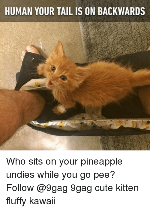 9gag, Cute, and Memes: HUMAN YOUR TAIL IS ON BACKWARDS Who sits on your pineapple undies while you go pee? Follow @9gag 9gag cute kitten fluffy kawaii