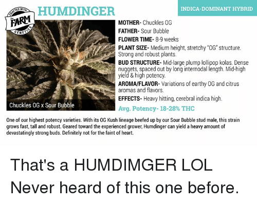 HUMDINGER INDICA-DOMINANT HYBRID MOTHER- Chuckles 0G FATHER