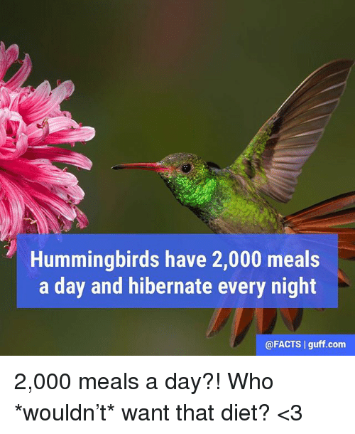 Facts, Memes, and Diet: Hummingbirds have 2,000 meals  a day and hibernate every night  @FACTS guff com 2,000 meals a day?! Who *wouldn't* want that diet? <3
