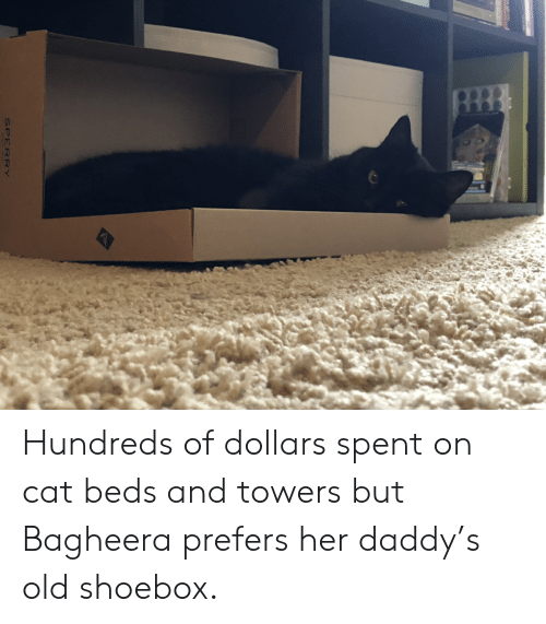 Old, Her, and Cat: Hundreds of dollars spent on cat beds and towers but Bagheera prefers her daddy's old shoebox.