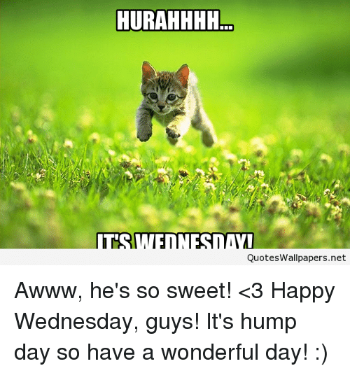 Hump Day, Memes, and Wallpaper: HURAHHHH  Quotes Wallpapers.net Awww, he's so sweet! <3 Happy Wednesday, guys! It's hump day so have a wonderful day! :)