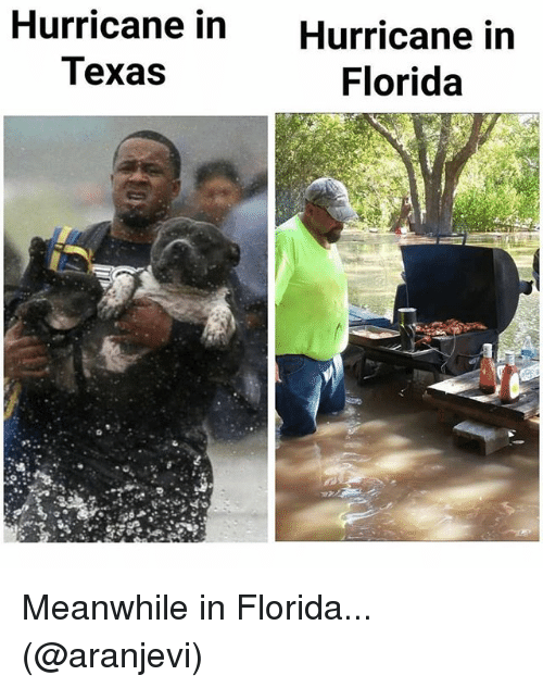 Memes, Florida, and Hurricane: Hurricane in  Texas  Hurricane in  Florida Meanwhile in Florida... (@aranjevi)