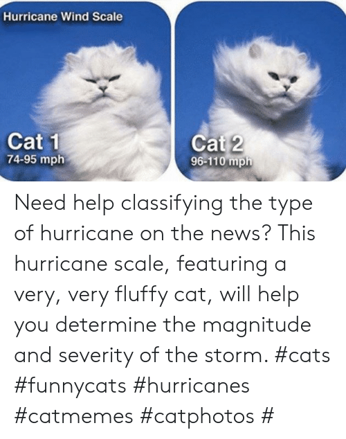 Cats, News, and Help: Hurricane Wind Scale  Cat 1  74-95 mph  Cat 2  96-110 mph Need help classifying the type of hurricane on the news? This hurricane scale, featuring a very, very fluffy cat, will help you determine the magnitude and severity of the storm. #cats #funnycats #hurricanes #catmemes #catphotos #