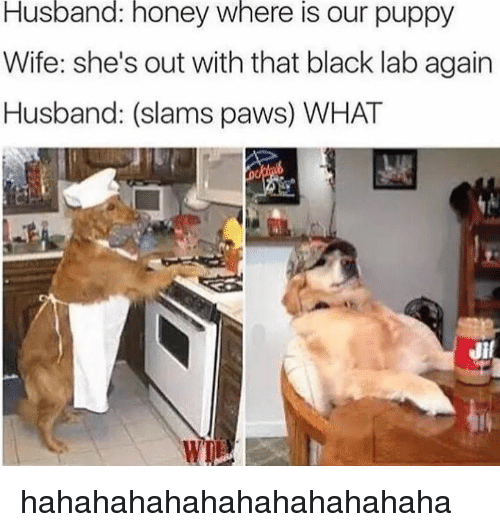 My Daughter Is Not Dating A Black Lab