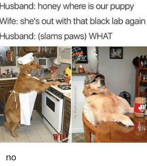 Husband Honey Where Is Our Puppy Wife She S Out With That Black Lab