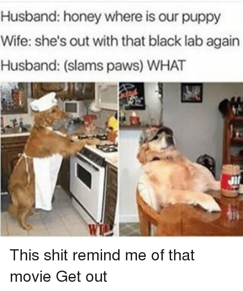 husband honey where is our puppy wife shes out with 20246032 25 best black lab memes meth lab memes, daughters memes, lab memes