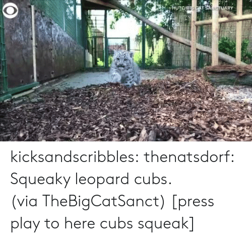 Target, Tumblr, and Twitter: HUTOBICAT SANCTUARY kicksandscribbles:  thenatsdorf: Squeaky leopard cubs. (via TheBigCatSanct) [press play to here cubs squeak]