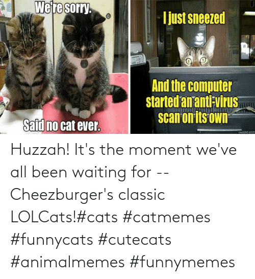 Cats, Waiting..., and LOLcats: Huzzah! It's the moment we've all been waiting for -- Cheezburger's classic LOLCats!#cats #catmemes #funnycats #cutecats #animalmemes #funnymemes