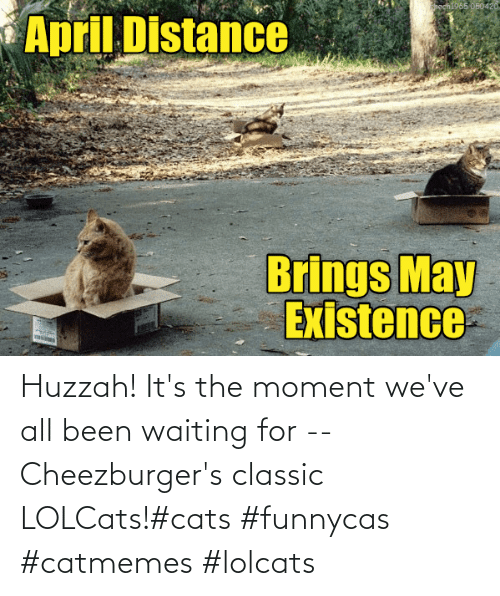 Cats, Waiting..., and LOLcats: Huzzah! It's the moment we've all been waiting for -- Cheezburger's classic LOLCats!#cats #funnycas #catmemes #lolcats
