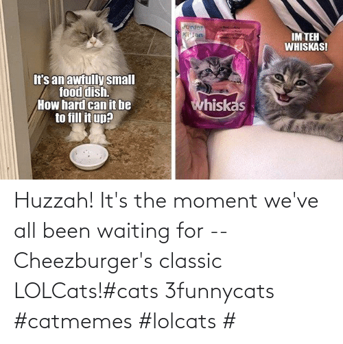 Cats, Waiting..., and LOLcats: Huzzah! It's the moment we've all been waiting for -- Cheezburger's classic LOLCats!#cats 3funnycats #catmemes #lolcats #