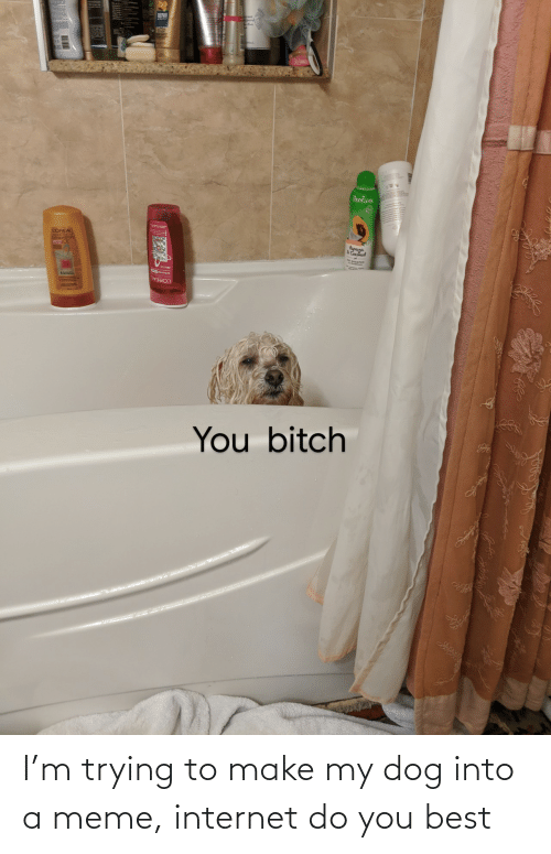 Internet, Meme, and Best: I'm trying to make my dog into a meme, internet do you best