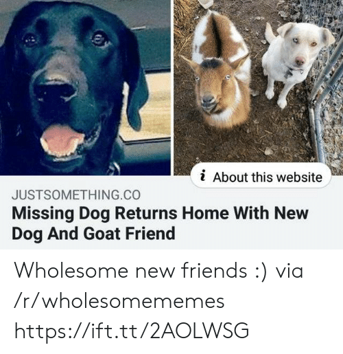 Friends, Goat, and Home: i About this website  JUSTSOMETHING.CO  Missing Dog Returns Home With New  Dog And Goat Friend Wholesome new friends :) via /r/wholesomememes https://ift.tt/2AOLWSG