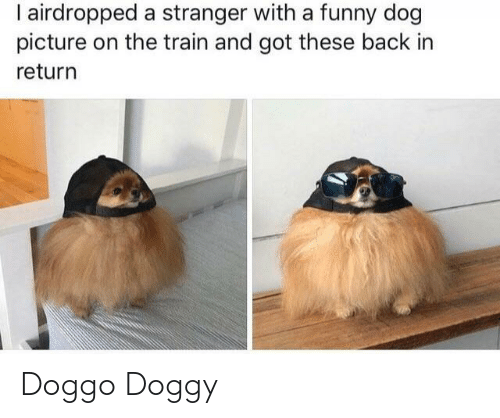 Funny, Train, and Back: I airdropped a stranger with a funny dog  picture on the train and got these back in  return Doggo Doggy