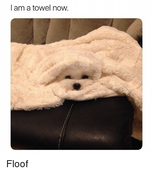 Funny, Now, and Towel: I am a towel now. Floof