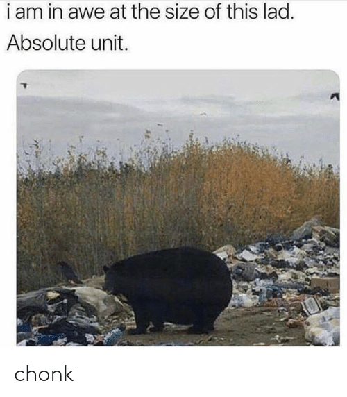 Lad, Unit, and This: i am in awe at the size of this lad.  Absolute unit. chonk