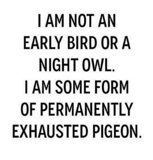 Dank, 🤖, and Owl: I AM NOT AN  EARLY BIRD OR A  NIGHT OWL  I AM SOME FORM  OF PERMANENTLY  EXHAUSTED PIGEON  YN  NIO  NR  RIE  A0  ON IG  FEP  TD  OROEN  N BI TMA  OMT  MYGS  RS  EU  IR NI M  MPA  -A  AFH  10X