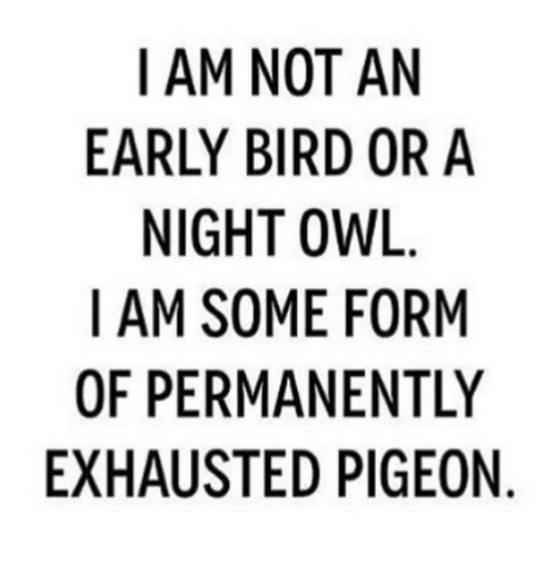 Owl, Pigeon, and Exhausted: I AM NOT AN  EARLY BIRD OR A  NIGHT OWL  I AM SOME FORM  OF PERMANENTLY  EXHAUSTED PIGEON