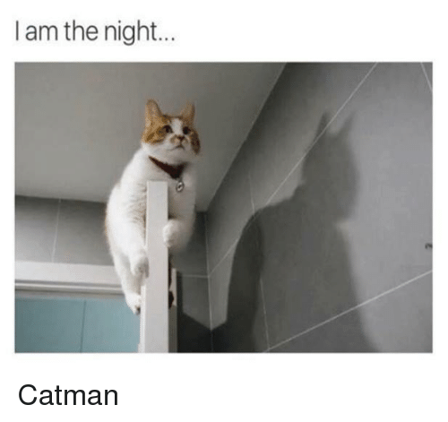 Memes, 🤖, and Catman: I am the night... Catman