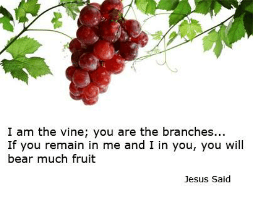 I Am The Vine You Are Branches If Remain In Me And