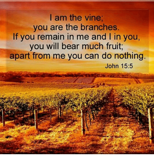 I Am The Vine You Are The Branches If You Remain In Me And