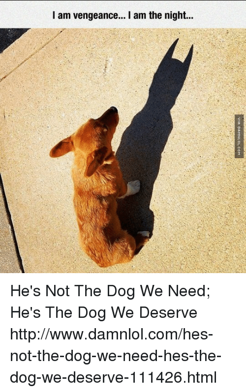 Memes, Http, and 🤖: I am vengeance... I am the night... He's Not The Dog We Need; He's The Dog We Deserve http://www.damnlol.com/hes-not-the-dog-we-need-hes-the-dog-we-deserve-111426.html