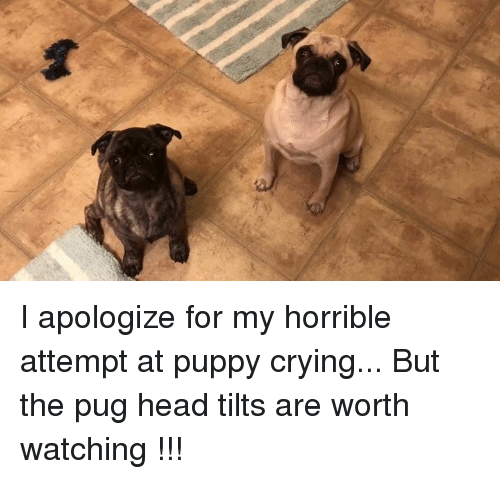 I Apologize For My Horrible Attempt At Puppy Crying But The Pug Head
