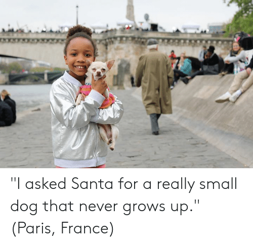 """Dank, France, and Paris: """"I asked Santa for a really small dog that never grows up.""""  (Paris, France)"""