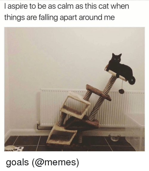i aspire to be as calm as this cat when 10410283 ✅ 25 best memes about goals meme goals memes