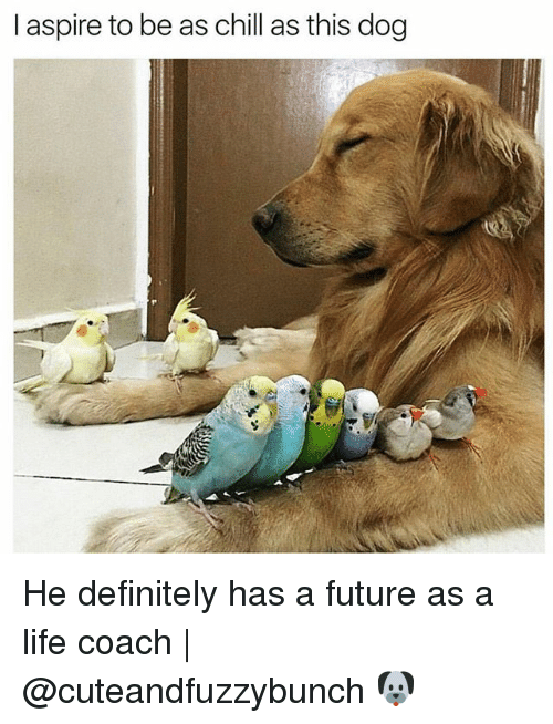 Chill, Definitely, and Future: I aspire to be as chill as this dog He definitely has a future as a life coach | @cuteandfuzzybunch 🐶