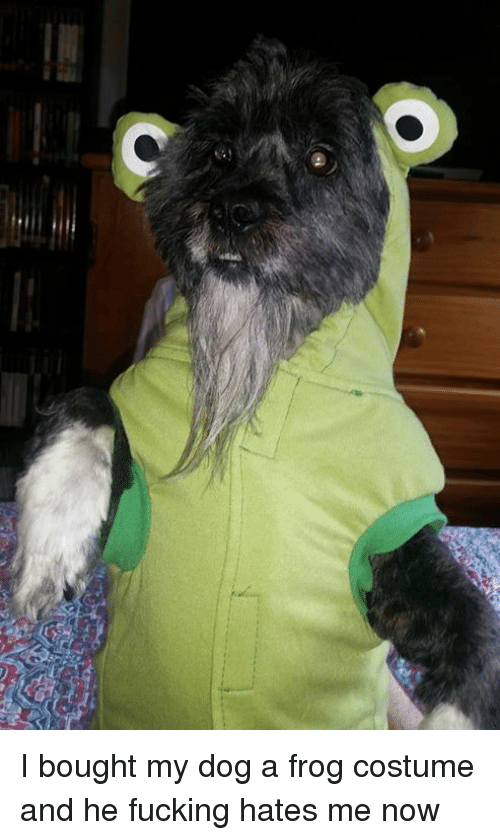 I Bought My Dog A Frog Costume And He Fucking Hates Me Now Fucking