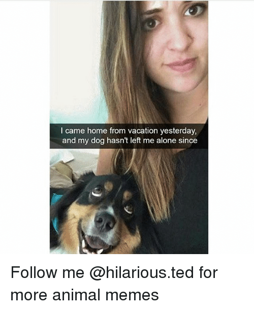 Being Alone, Funny, and Memes: I came home from vacation yesterday,  and my dog hasn't left me alone since Follow me @hilarious.ted for more animal memes