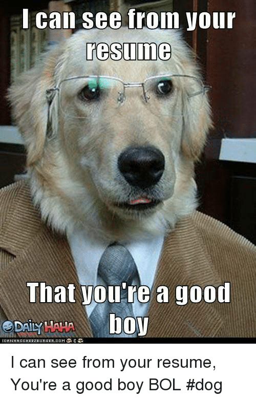 i can see fron your resume that you u0026 39 re a good boy