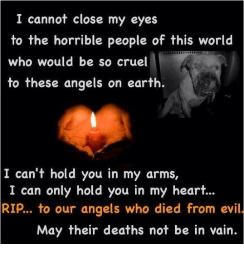 Image result for to the horrible people of this world who would be so cruel to these angels of earth