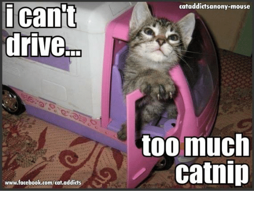 i cant drive www facebook com cat addicts cataddict sanony mouse too much catnip 6290226 ✅ 25 best memes about too much catnip too much catnip memes
