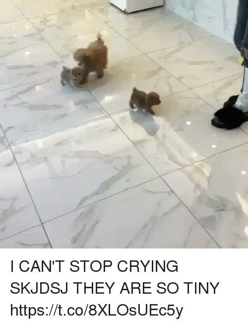 Crying, Girl Memes, and Tiny: I CAN'T STOP CRYING SKJDSJ THEY ARE SO TINY  https://t.co/8XLOsUEc5y