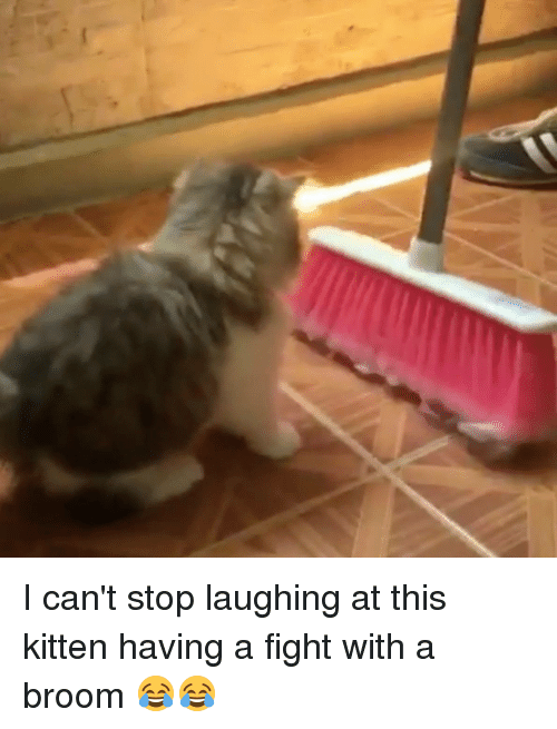 Dank, 🤖, and Kitten: I can't stop laughing at this kitten having a fight with a broom 😂😂