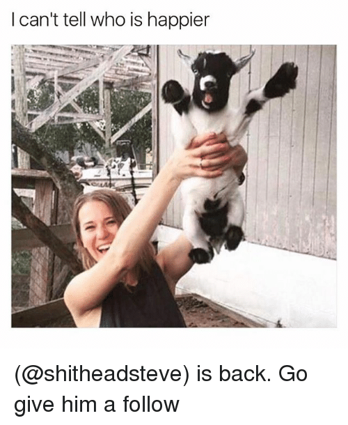 Funny, Meme, and  I Cant: I can't tell who is happier (@shitheadsteve) is back. Go give him a follow