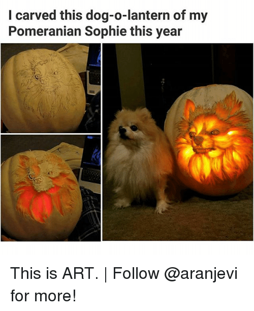 Memes, Pomeranian, and 🤖: I carved this dog-o-lantern of my  Pomeranian Sophie this year This is ART. | Follow @aranjevi for more!