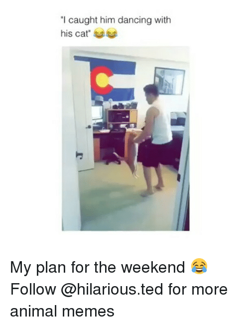 "Dancing, Funny, and Memes: ""I caught him dancing with  his cat"" My plan for the weekend 😂 Follow @hilarious.ted for more animal memes"