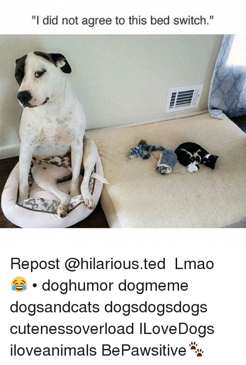 """Lmao, Memes, and Ted: """"I did not agree to this bed switch."""" Repost @hilarious.ted ・・・ Lmao 😂 • doghumor dogmeme dogsandcats dogsdogsdogs cutenessoverload ILoveDogs iloveanimals BePawsitive🐾"""