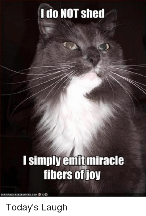 I Do Not Shed I Simply Emit Miracle Fibers Of Joy Todays Laugh
